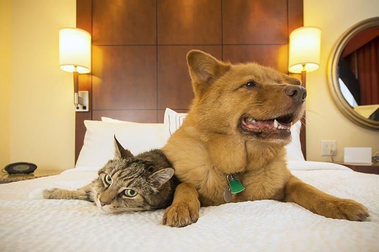Hund och en katt på en hotell säng.