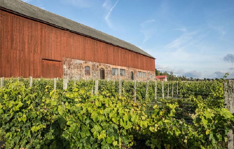 ladugård bakom vinrankor