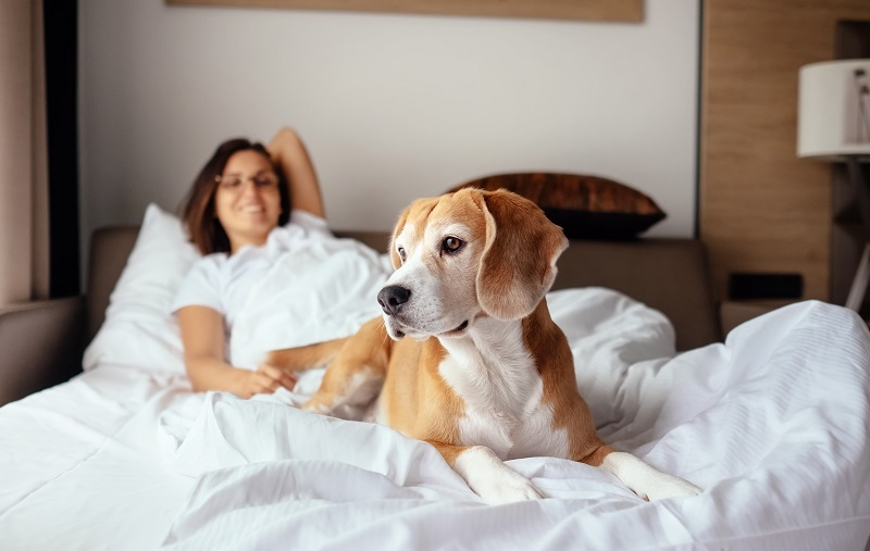 kvinna och hund som ligger i en säng på hotell